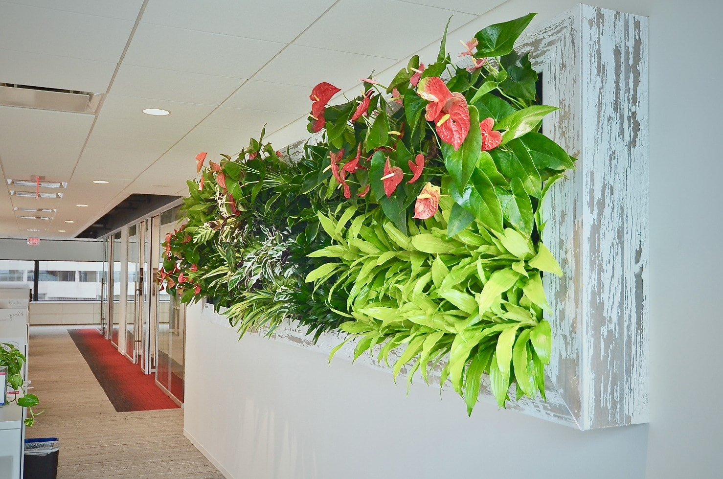 Green Wall, Plant Wall, Plants on the Wall, Living Wall, Vertical Gardens Washington DC, Bethesda Maryland, Rockville Maryland