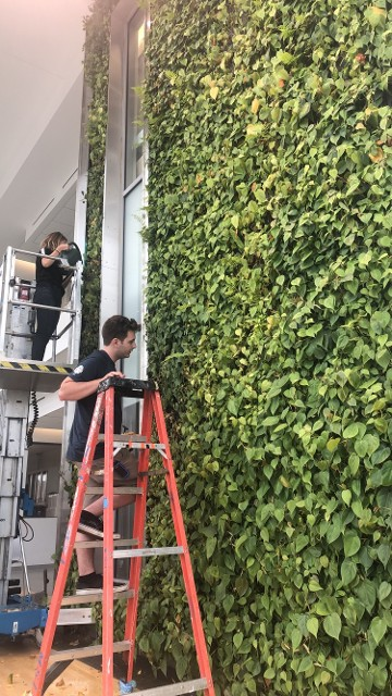 Two Story Plant Wall. Living Wall Washington DC Virginia Maryland