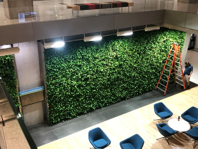 Plant Wall Maintenance Washington DC