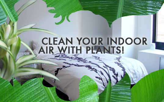 Clean Your Indoor Air with Plants!